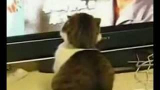 Drama Cat