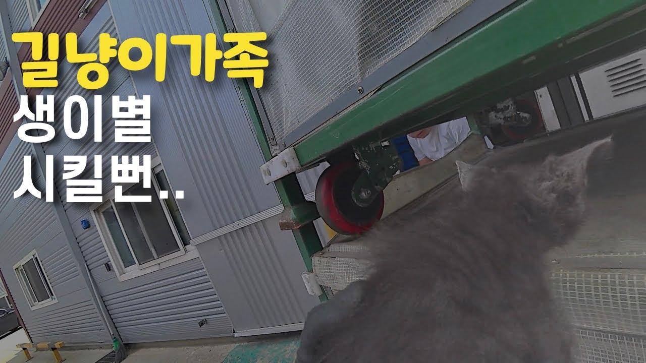 길냥이 가족의 생이별 막은 화물차 기사[EP331]