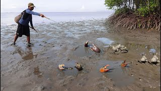 Amazing Hunting King Crabs at Mud Sea after Water Low Tide  Season Catch Sea Crabs