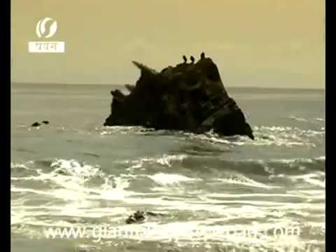 Unknown Giant Monster found after tsunami