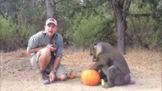 Halloween for monkeys!!!
