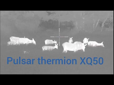 Pulsar thermion xq50 wild boar & red deer video