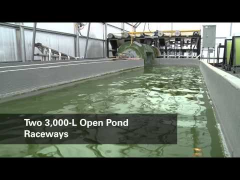 Algal Production Facility Overview