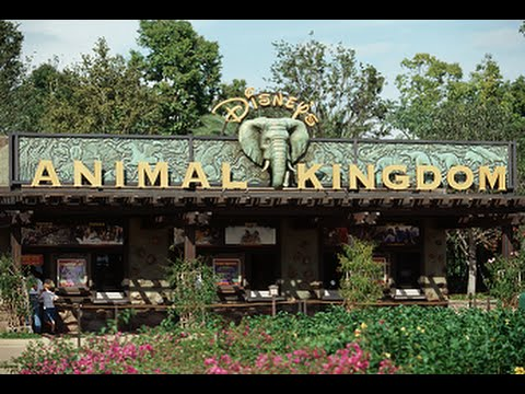 Disney's Animal Kingdom, Theme Park in Florida - Best Travel Destination