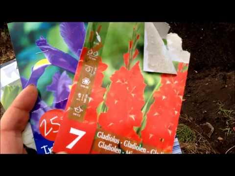 Frühlingsvorbereitungen im Garten & Neues vom Gemüse/Chilis