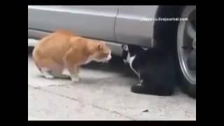 Чёрно- белый кот обосрался