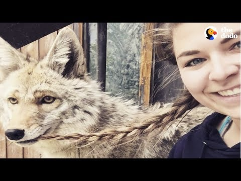 Rescued Wolf Dogs Find Perfect Home at Wolfdog Sanctuary   The Dodo