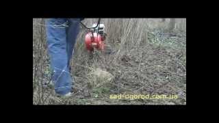 Мотокультиватор Итальяно-2 c роторами (Видео 2)(Мотокультиватор фирмы BENASSI, модель BL-350H (Итальяно-2) с активными роторами расчищает запущенный сад от сорняк..., 2010-03-01T15:55:30.000Z)