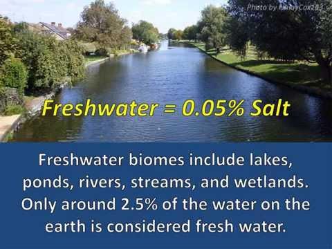 Freshwater Adaptations