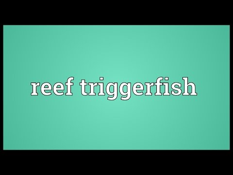 Reef triggerfish Meaning
