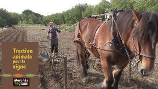 Grande foire de la petite agriculture 2015  Focus traction vigne