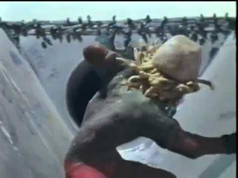 SKATEBOARD MADNESS 1980 Claymation - YouTube 3b6dad997e5