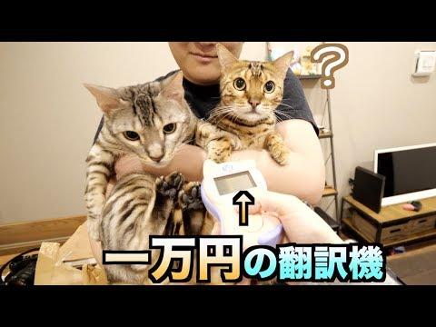 一万円の猫翻訳機でルトとロゼの鳴き声を翻訳したら衝撃的な言葉が。。。