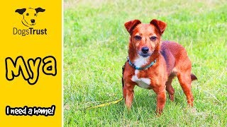 Mya the Crossbreed Cutie is a Super Sweet, Tiny Girl Looking For a Home! Dogs Trust Harefield