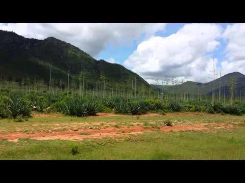 aloe vera farms