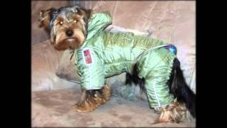 купить одежду для собаки в екатеринбурге