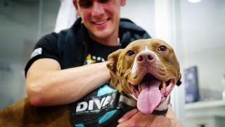 Amazing dog cries with joy meeting the man that rescued her after 6 months apart