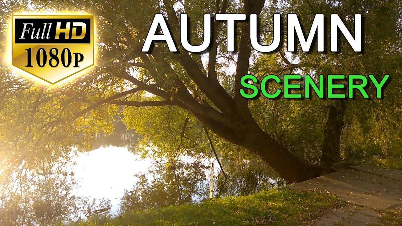 Beautiful nature video full hd 1080p beautiful autumn nature scenery
