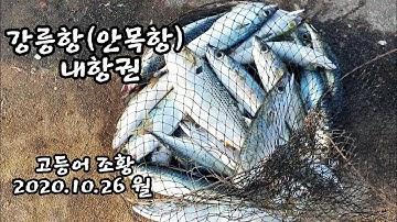 (번개영상) 강릉항에 떼로 나타난 고등어!! A school of mackerel appeared in the inner port.