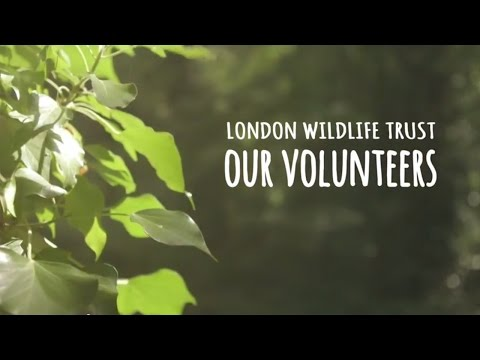 Volunteering and nature: London Wildlife Trust