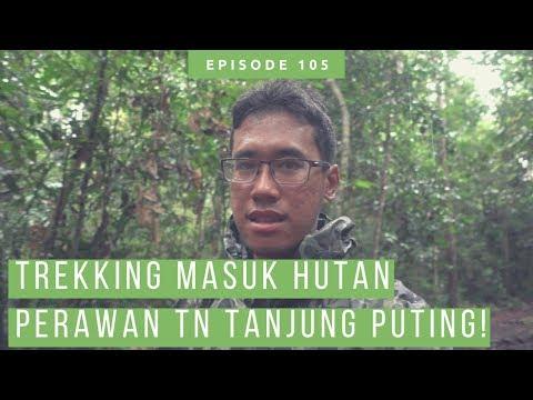 Trekking Di Tanjung Puting National Park, Melihat Orang Utan Di Alam Liar