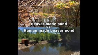 How to Make a Beaver Pond; Human Style