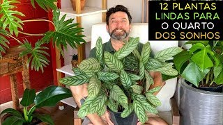 12 Plantas Lindas Para o Quarto dos Sonhos