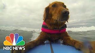 Surfing Dog Inspires Disabled Children | NBC News