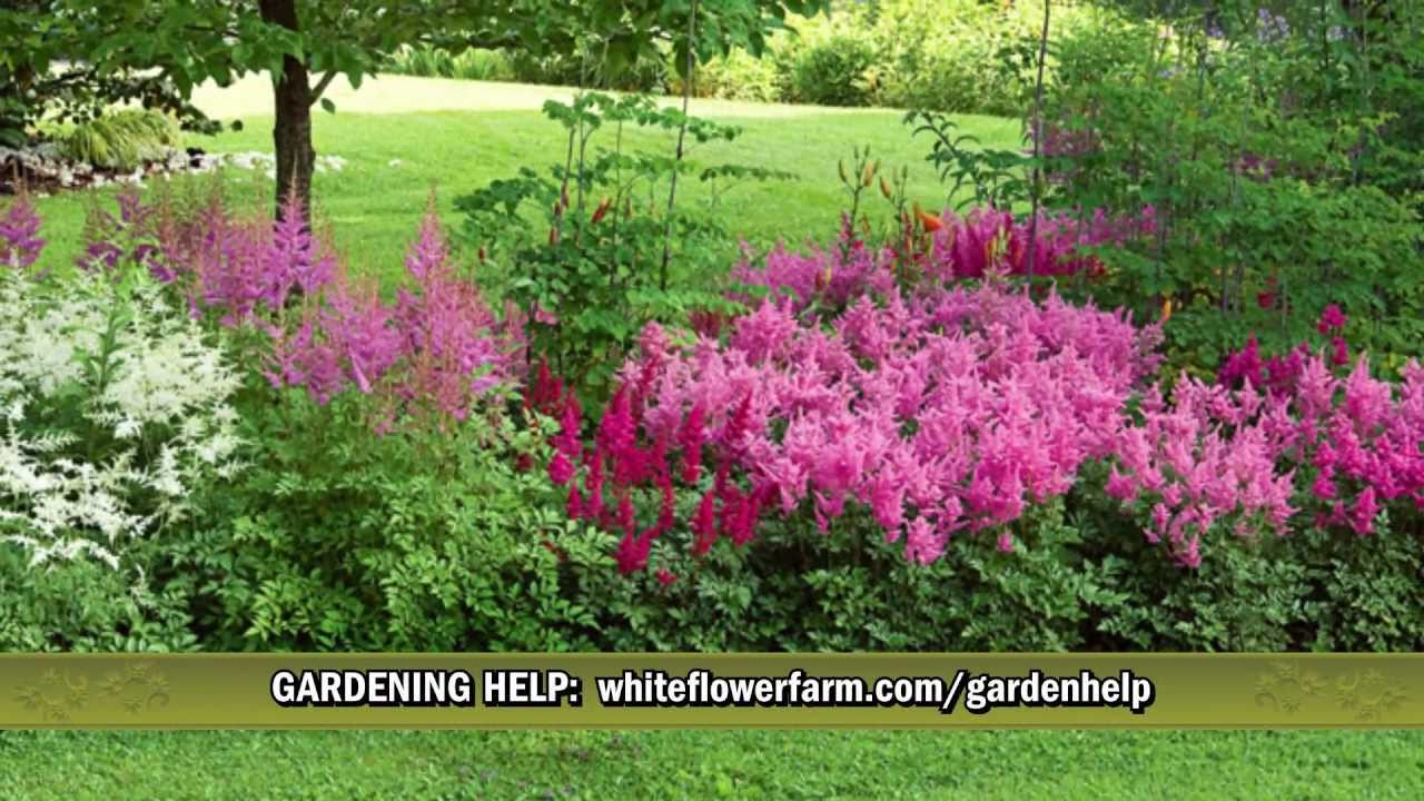 Cornerstone Astilbe Collection From White Flower Farm Youtube
