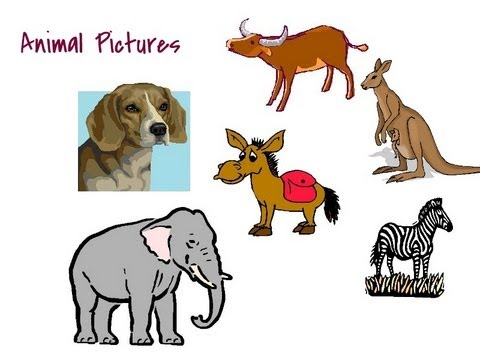animals for kids names of animals for children pictures and flash cards of animals video for kids