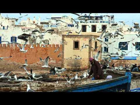 1 Hour - Urban Ambient Sounds - White Noise - seagulls in an oriental harbour - Relaxing - loud