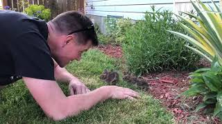 Man Gets Baby Bunnies  to Come out of Bushes - 1045151-1