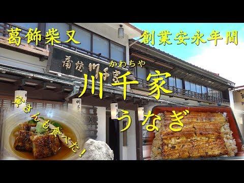 葛飾柴又【川千家】のうなぎ Eel dishes of KAWACHIYA in Shibamata.【飯動画】
