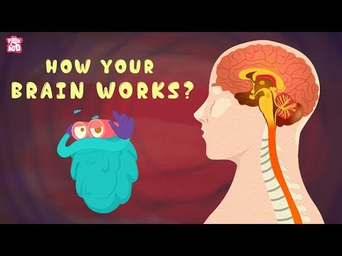 How Your Brain Works? - The Dr. Binocs Show | Best Learning