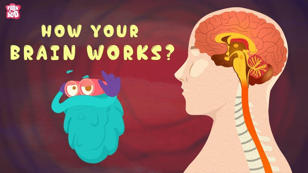 How Your Brain Works The Dr Binocs Show Best Learning Videos For Kids Peekaboo Kidz Human Body Homeschool Human Body Activities Whole Brain Teaching [ 720 x 1280 Pixel ]