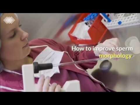how-to-improve-sperm-morphology-|-male-fertility-|-male-infertility