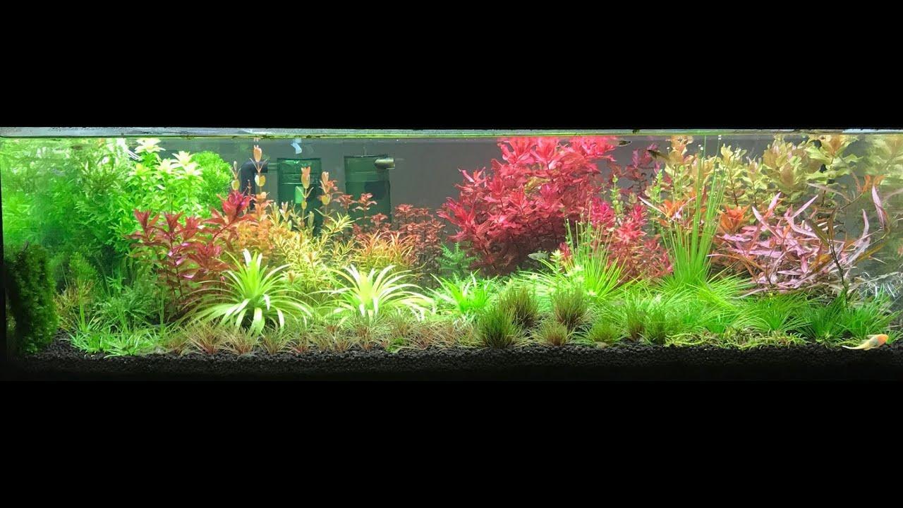 草坑農夫 翻缸日常 水族草缸 魚缸 黑土整理 虹吸管使用示範 - YouTube