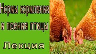 Нормы кормления и поения птицы.  Лекция.