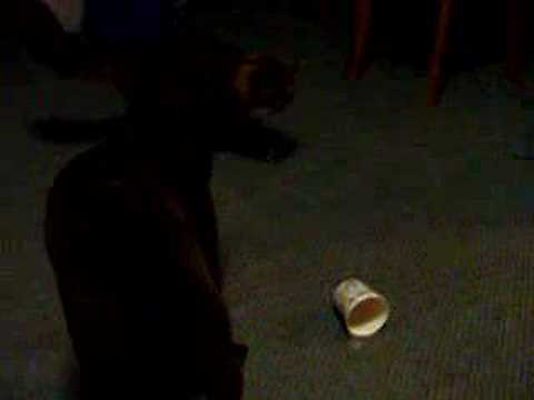 Stupid Cat getting its head stuck in Mcflurry Cup