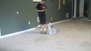 Naples, Fort Myers,  Dog Training: , Master Trainer Owner Childs First Lesson
