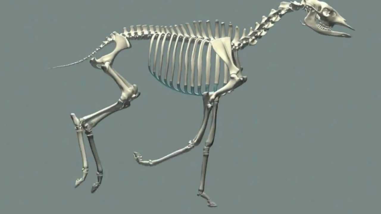 Digital Okapi Project By Esther Zuidgeest - Naturalis Leiden