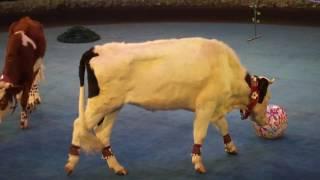 Цирк БРАВО клоуны ,коровы козы отличное веселое видео