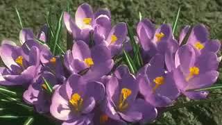 الله الله الله ... ياخالق الزهرة في حضن الجبل من فوق لونها ومنظرها آية في الجمال والذوق