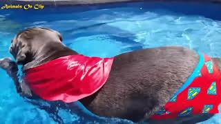 Animals Funny #3-3 Awesome Cute Pets