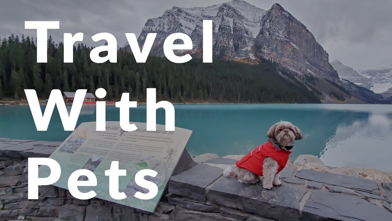 Home is where you bark It:  RV travel with pets