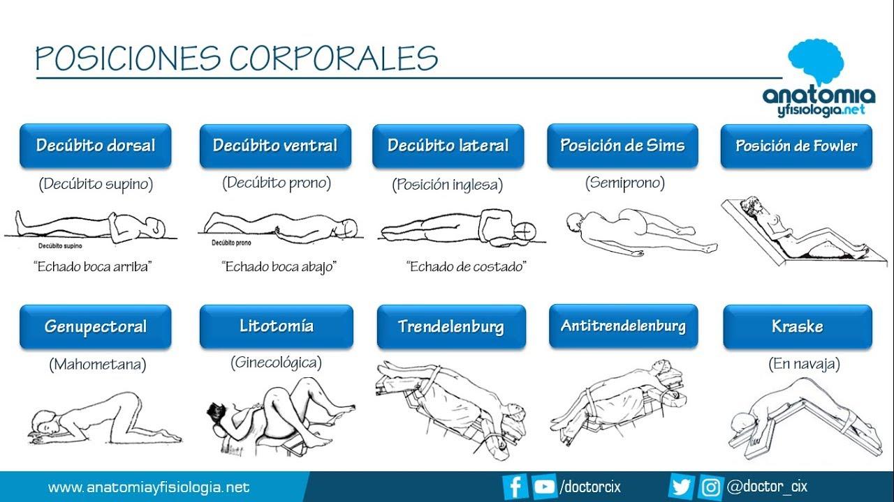 Posiciones Corporales Resúmenes De Anatomía Y Fisiología Youtube