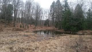 Wood Duck Pond Video