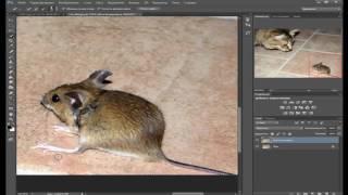 как увеличить объект в фотошоп уроки фотошопа
