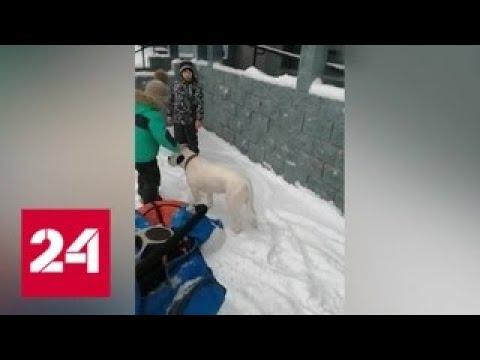 Уфимский собаковод держит в страхе весь город - Россия 24