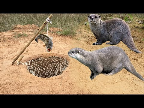 Awesome Quick Otters Trap Using Nets Deep Hole Trap That Work 100% By Smart Boy